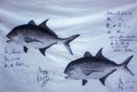 魚拓は県内トップクラス
